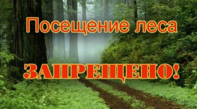 о запрете на посещение лесов